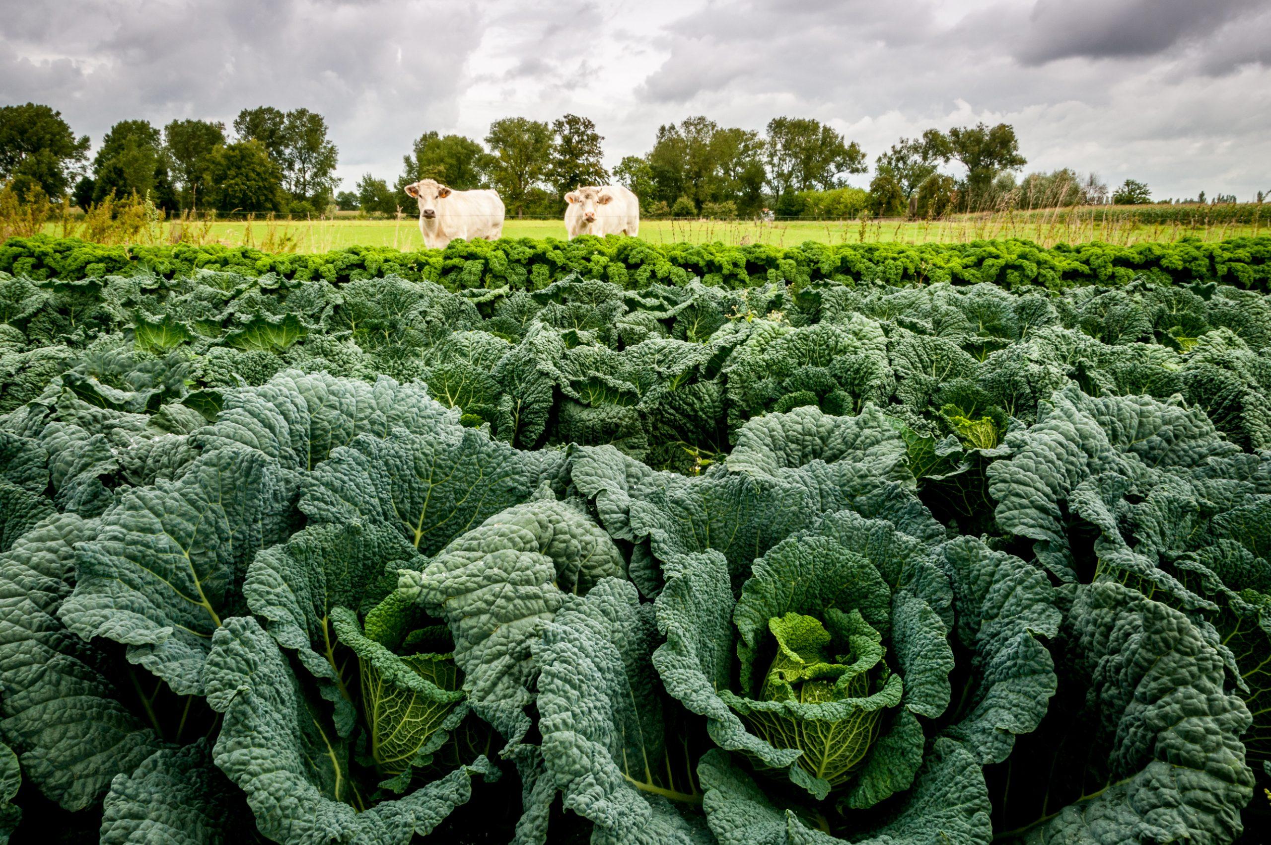 Hoe kan je je onderscheiden als landbouwer in de korte keten?